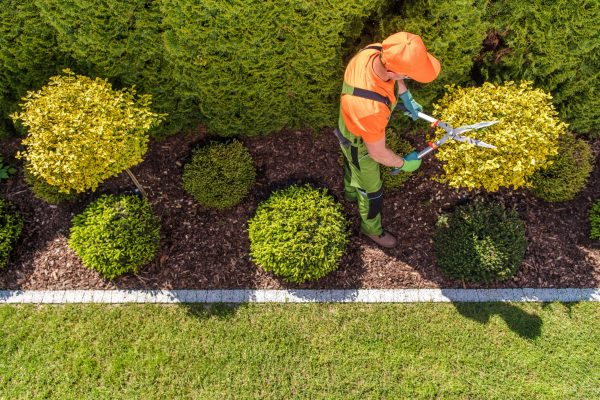 Professional Gardener and the Large Backyard Garden. Top View. Spring Time Maintenance. Trimming Trees and Plants.